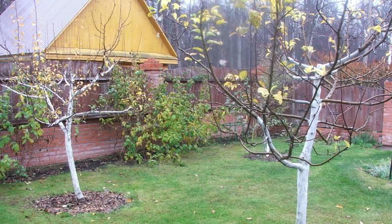 Как и когда утеплять деревья на зиму